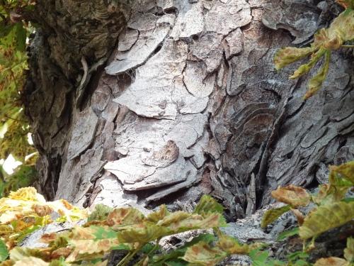 sick tree bark