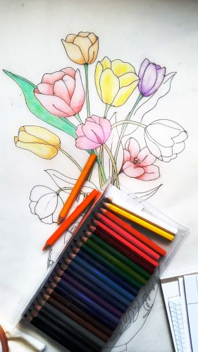 tulips tracing